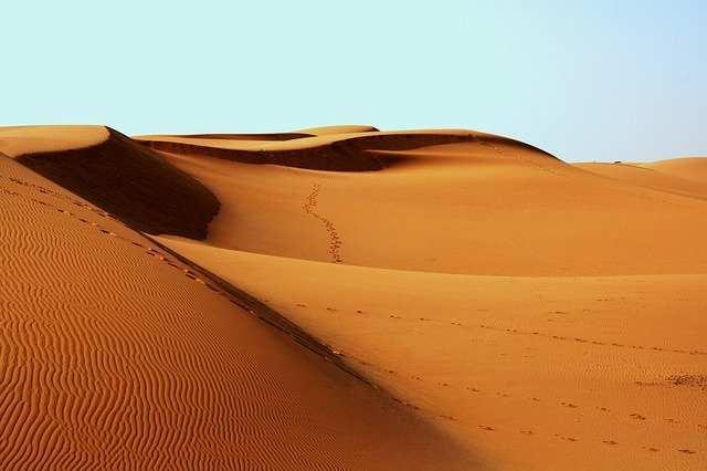 Deserto, le tecniche di sopravvivenza degli animali