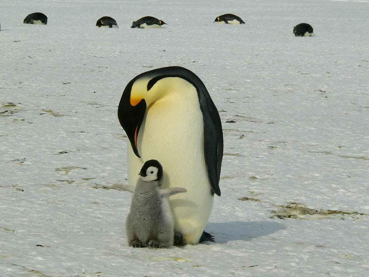 Che specie si trovano in Antartico