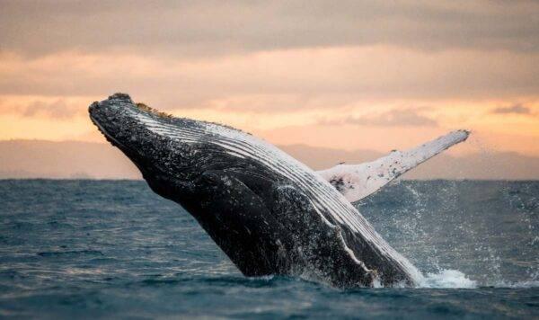 Le balene tornano a casa
