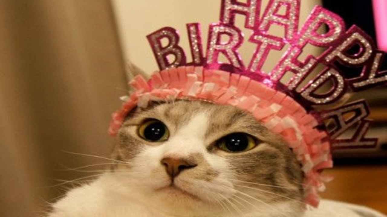 Festa di compleanno gatto focolaio
