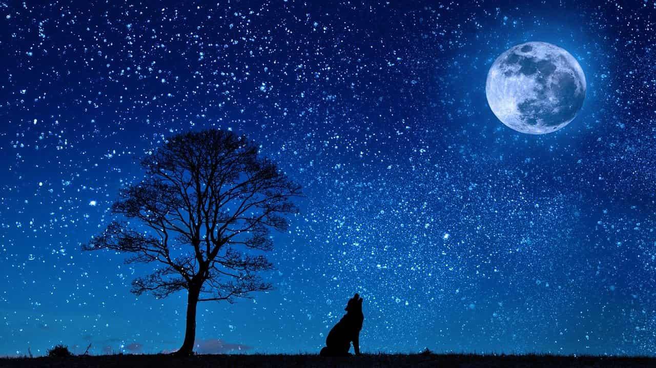 luna lupo piena