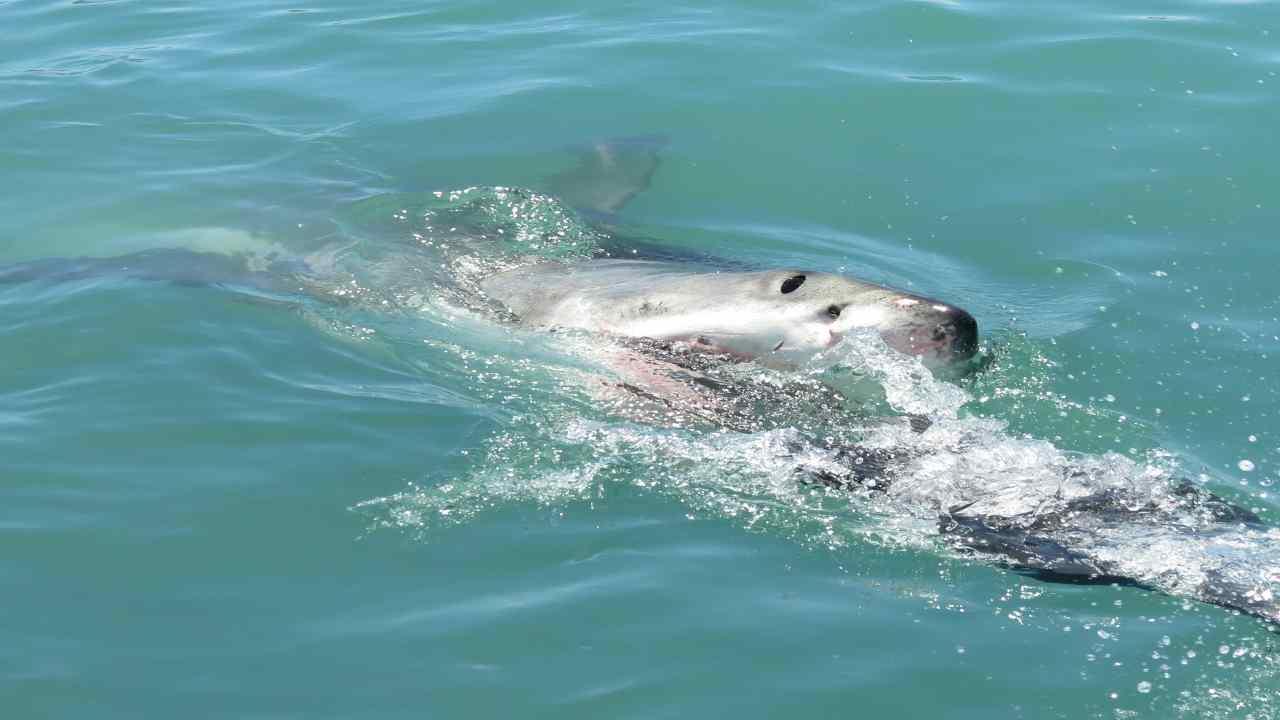 Kaela Marlow sbranata da squalo