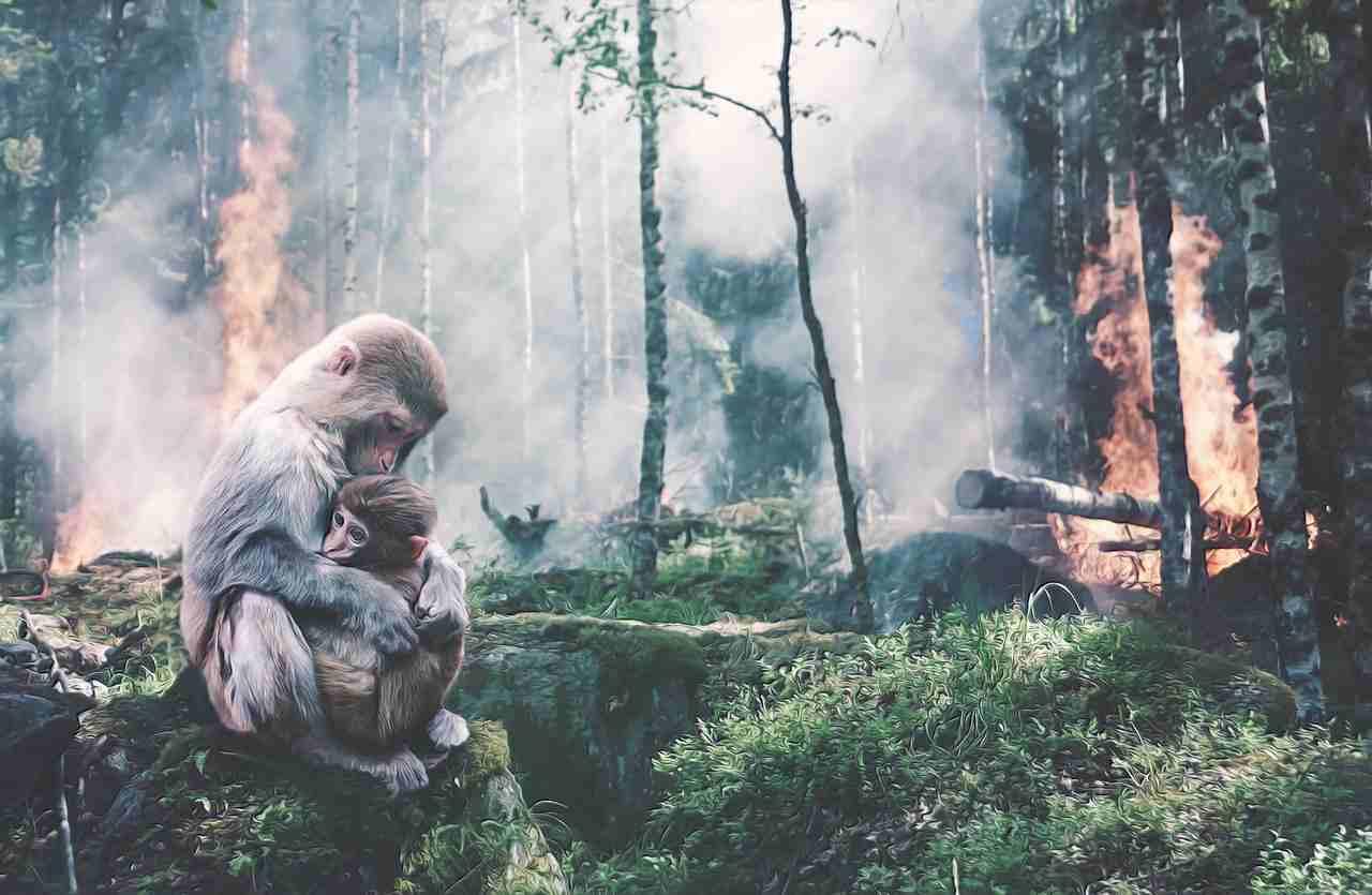 Il report sulla deforestazione nel mondo