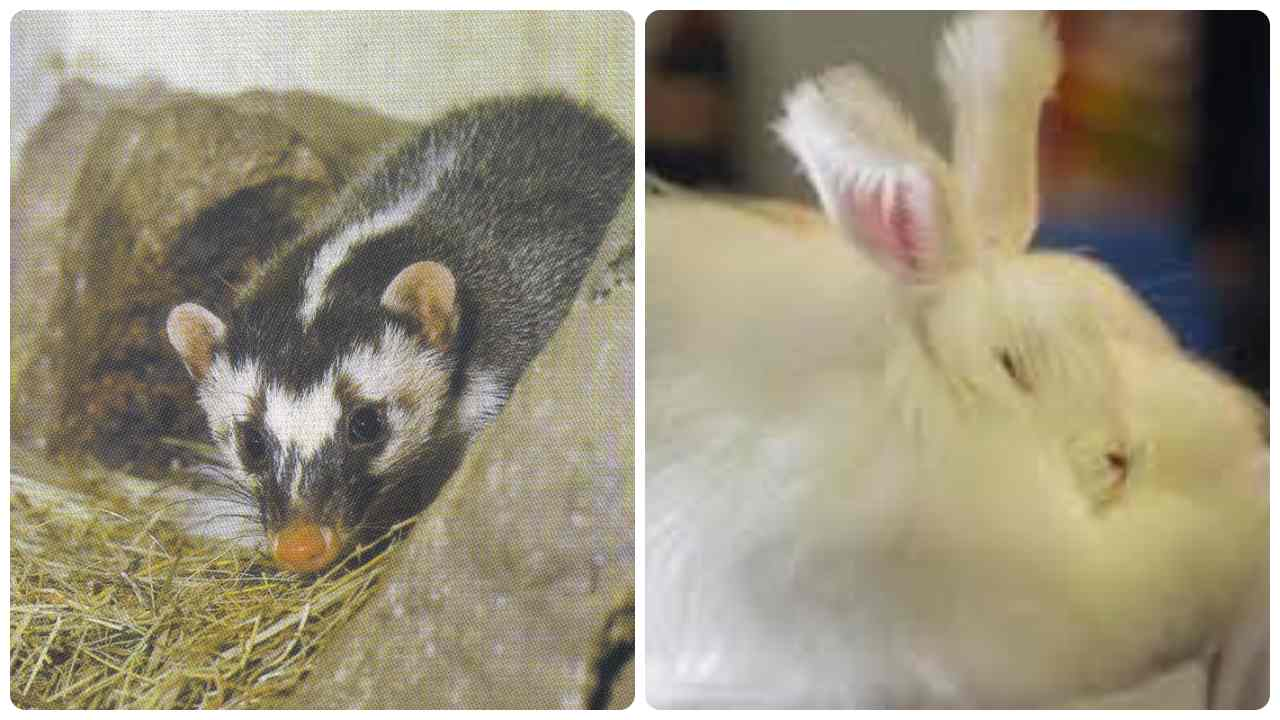 Coronavirus animali indagati