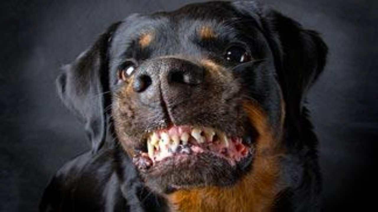 sbranata dal cane incidente
