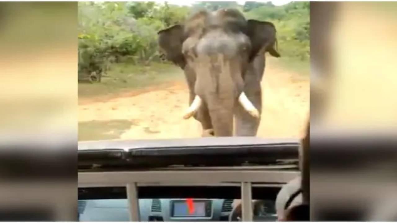 Elefante attacca turisti