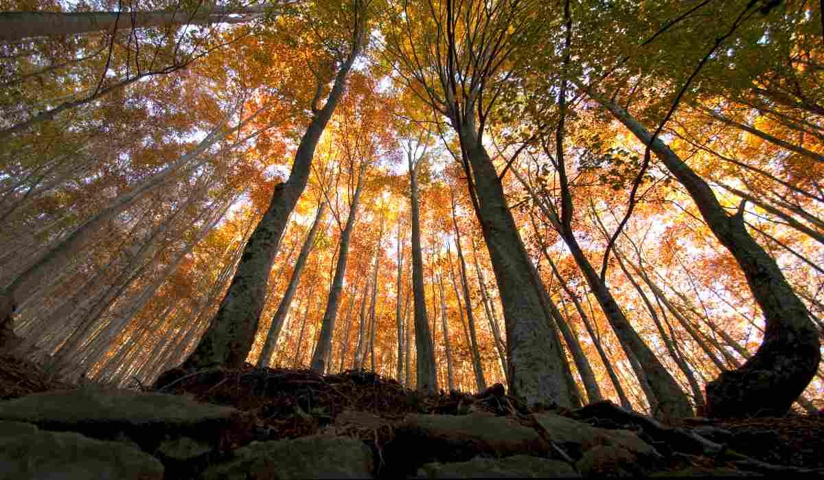 Gli alberi secolari