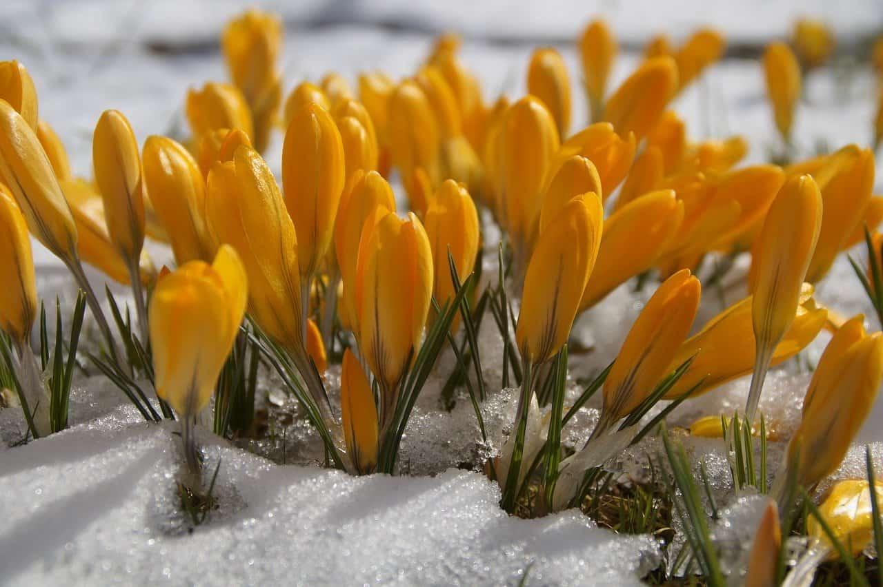 meteo settimana 15 marzo freddo