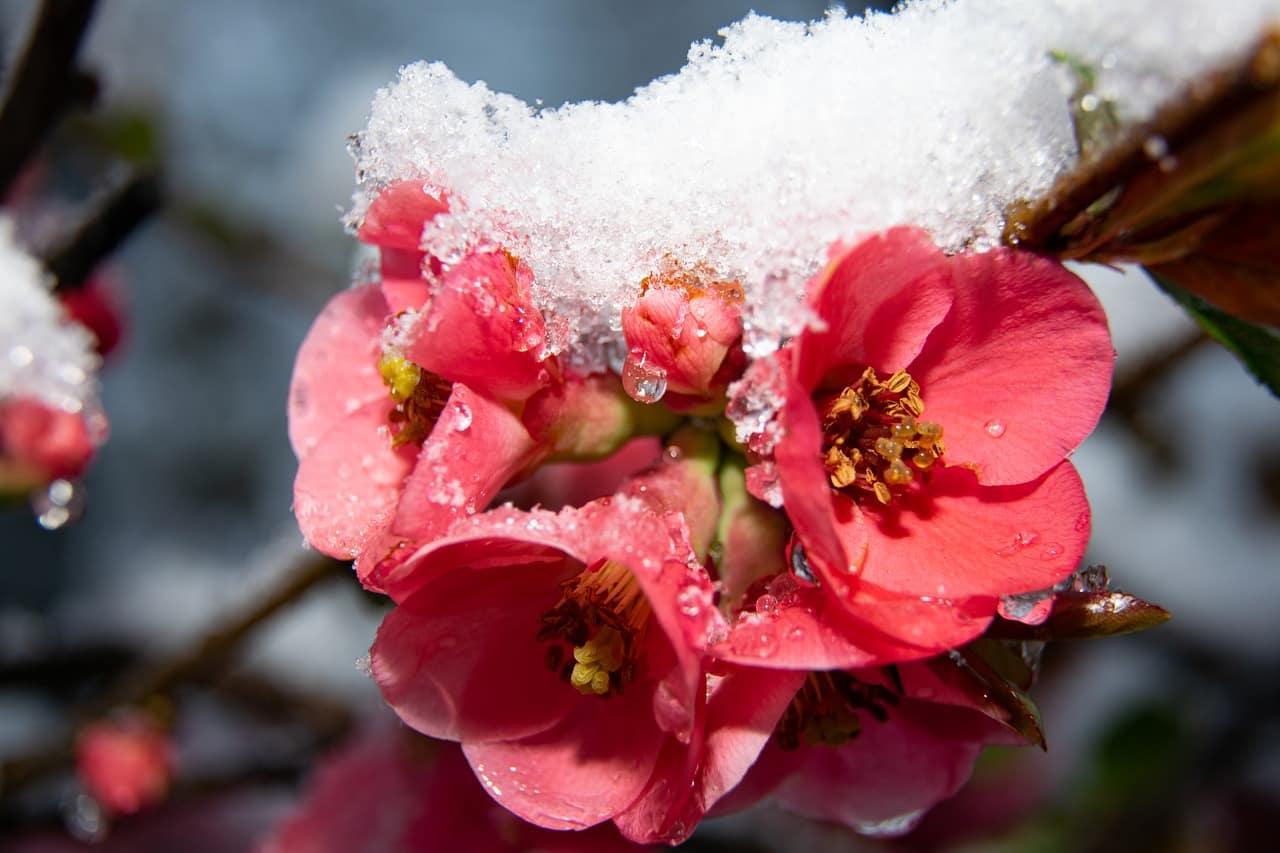meteo weekend 18-20 marzo neve