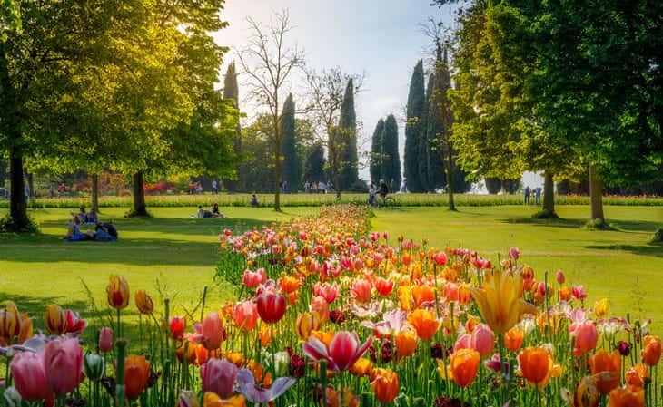 tulipani al Parco Sigurtà