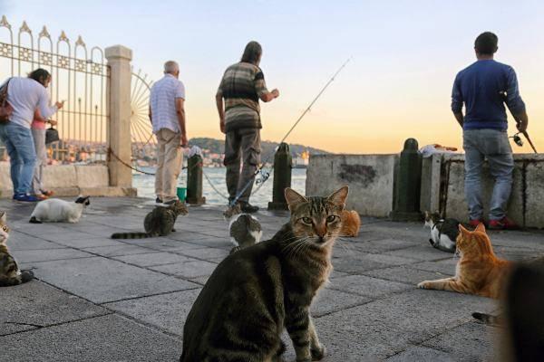 Gatti al porto di Istanbul (pixabay) cose non fare istanbul