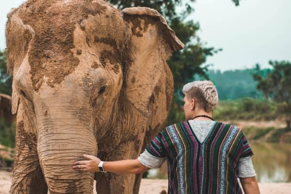 Gli elefanti in Thailandia (pixabay) cose non fare thailandia