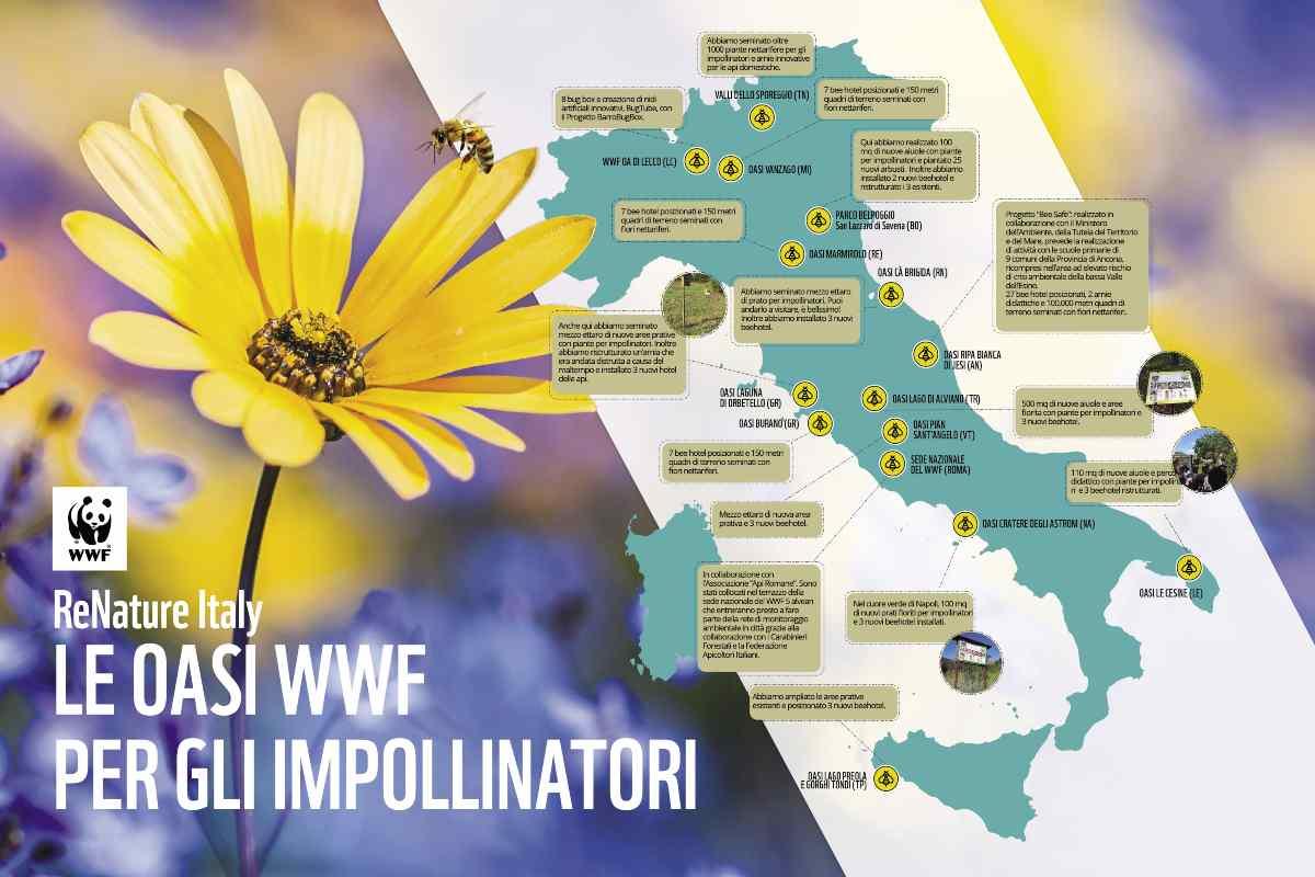 WWF L'importanza di preservare gli insetti impollinatori