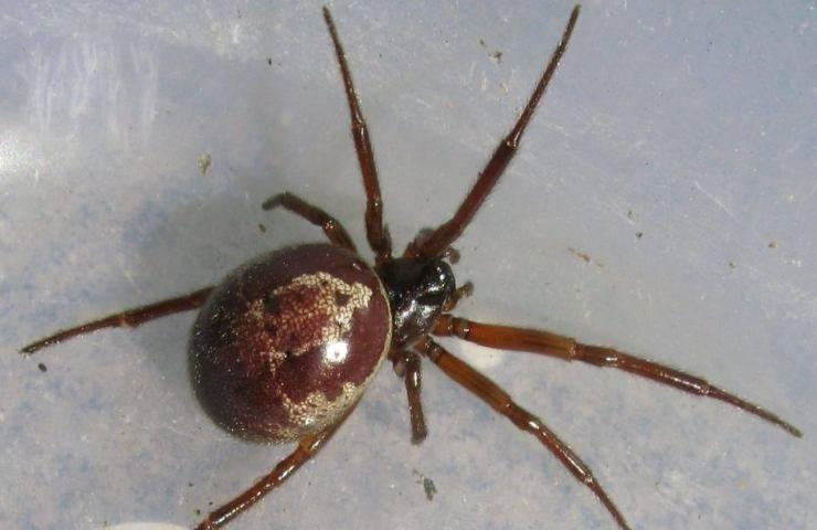 morso di ragno un incubo per una bimba