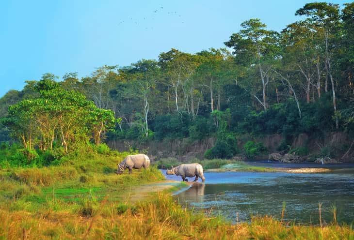 rinoceronti nel Parco di Chitwan in Nepa