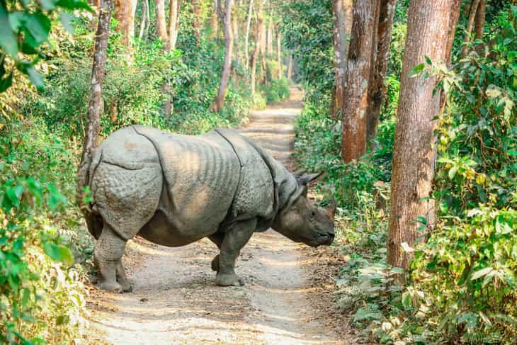 rinoceronte nel Parco di Chitwan in Nepal