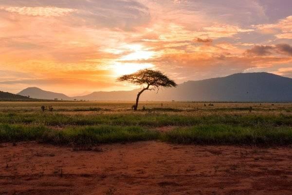 Tsavo East National Park, Kenya (unsplash) dove ricchi 1000 mese