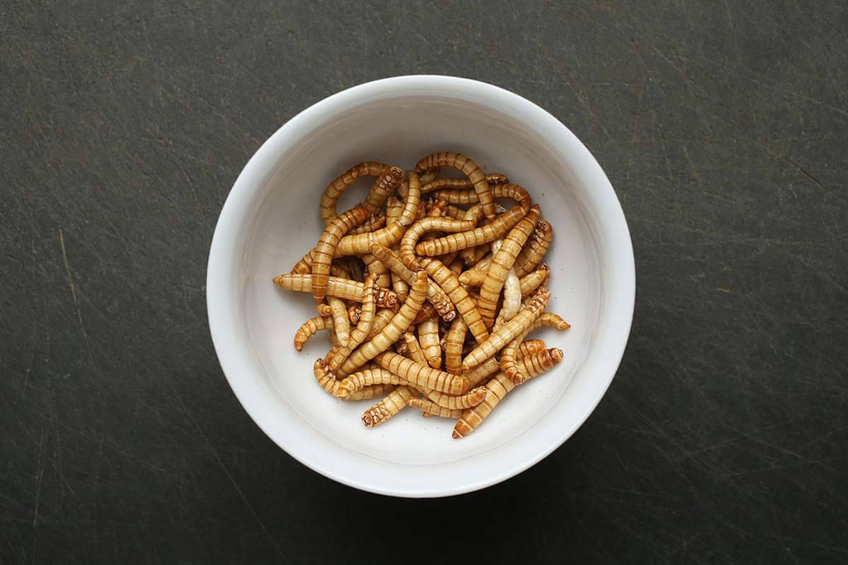 Si vendono gli insetti a scopo alimentare anche in Europa