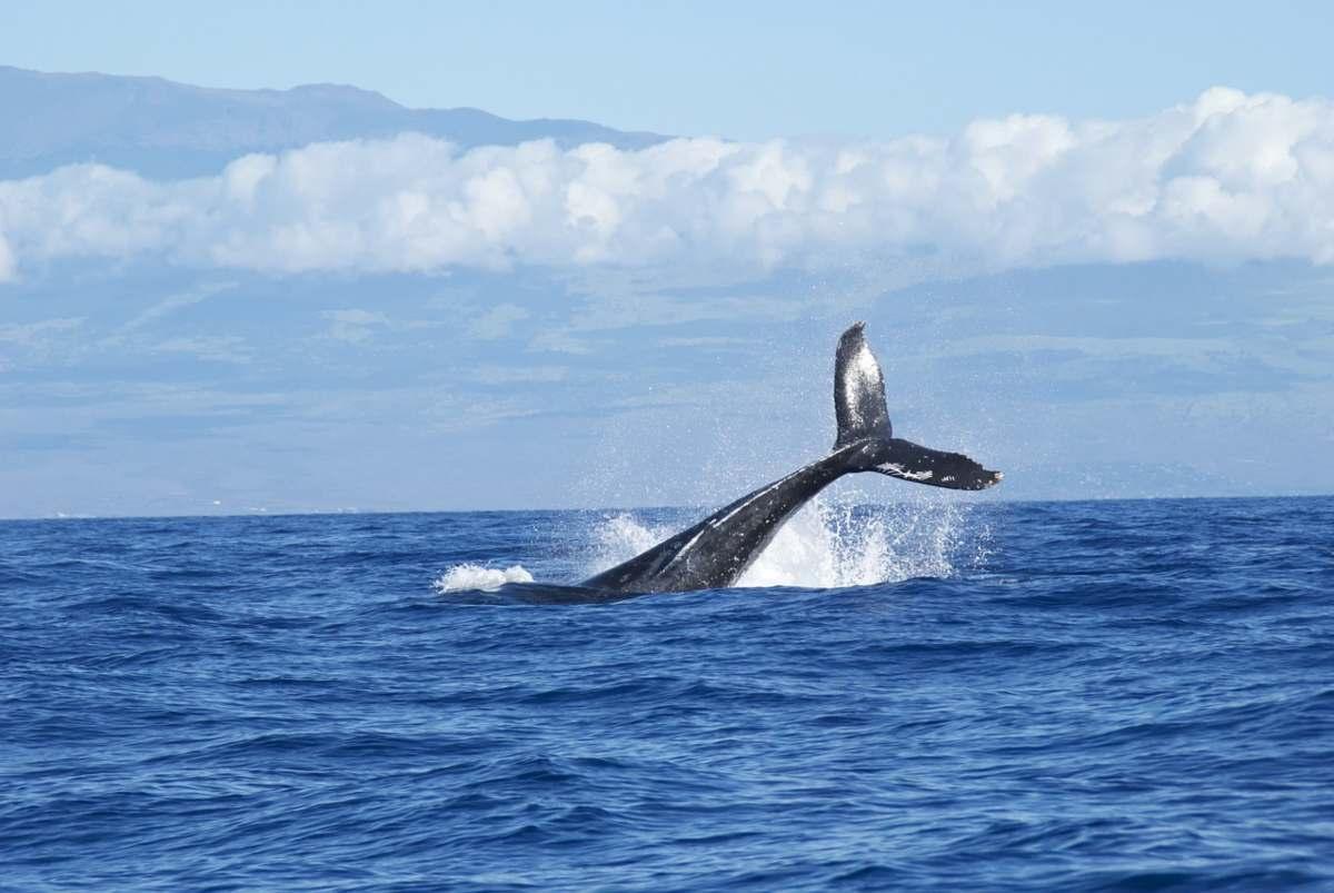Ritrovamento milionario nel ventre di una balena