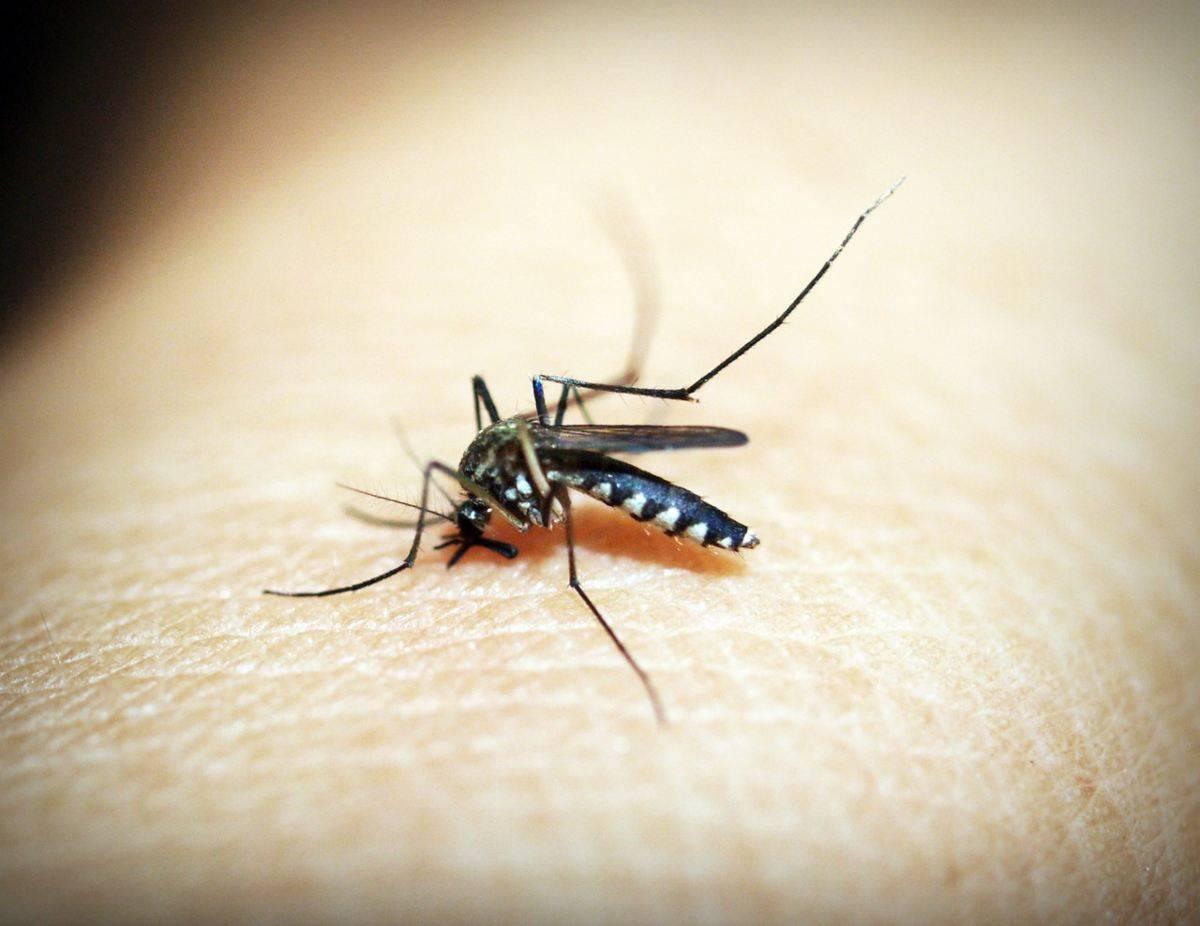 Chi sono le persone che vengono più punte dalle zanzare