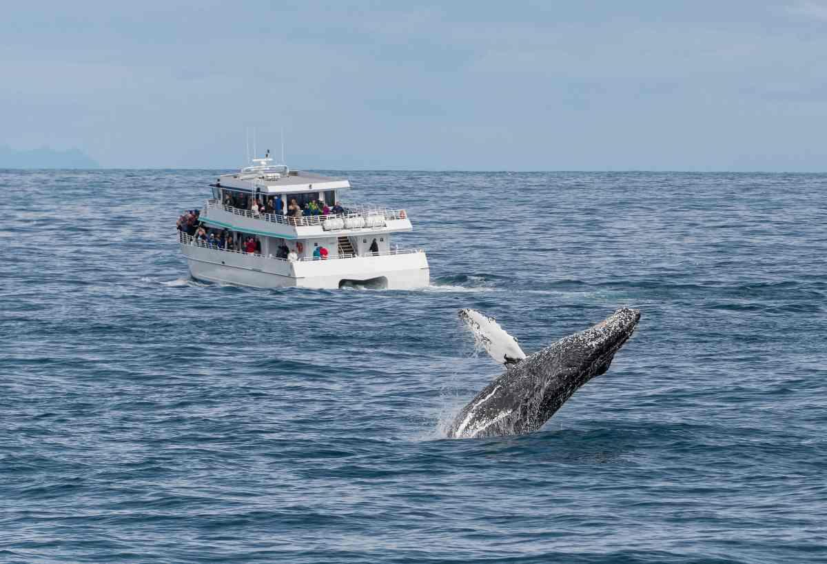 Cosa fare in caso di avvistamento cetacei mentre siete in barca