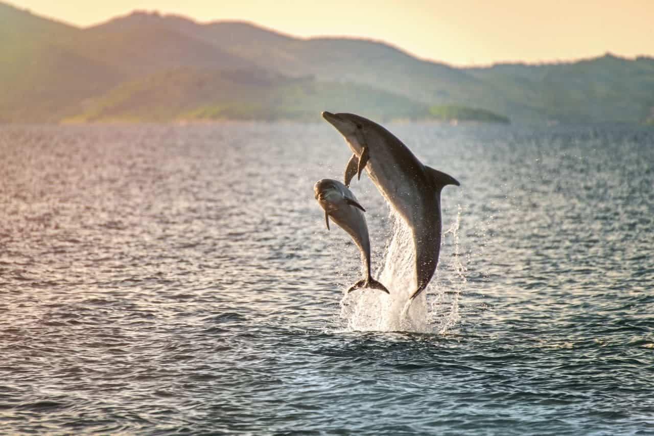 lussino isola delfini croazia