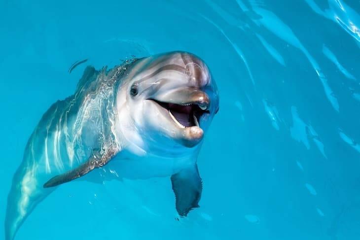 lussino isola croazia delfini