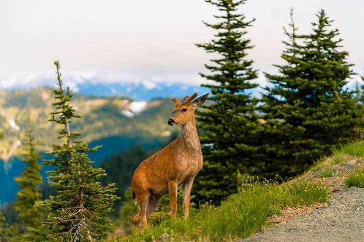 in vacanza in montagna estate contatto con la natura