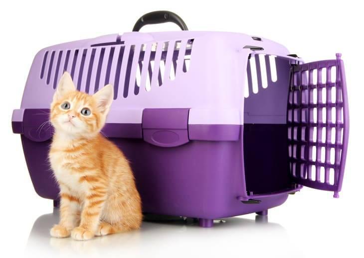 gatti treno costo
