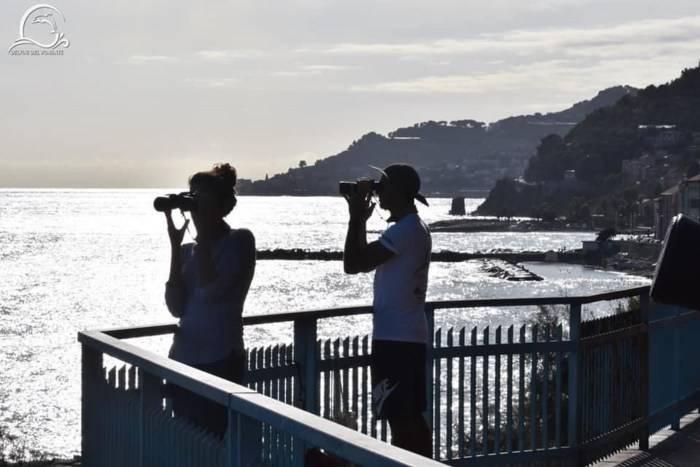 Monitoraggio delfini