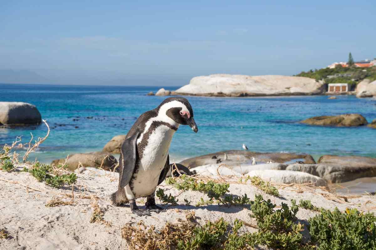 La città abitata dai pinguini