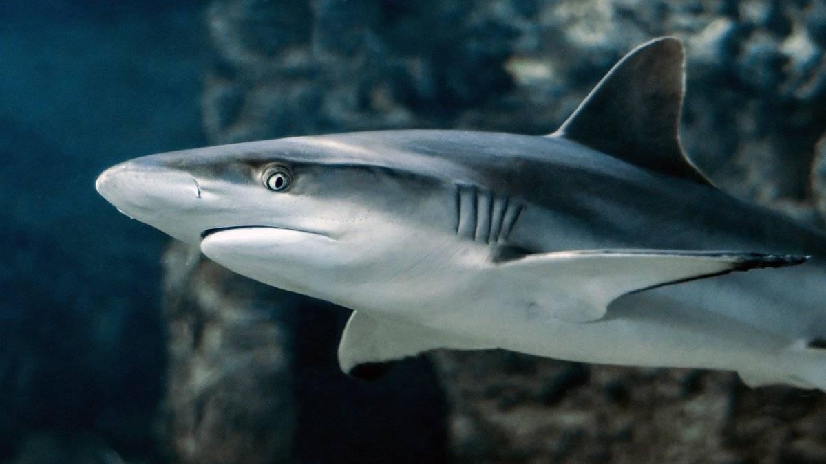 L'Italia è il primo paese importatore di carne di squalo