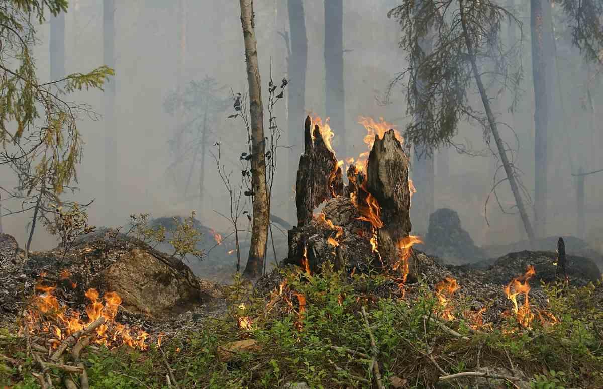 L'allarme WWF per gli incendi