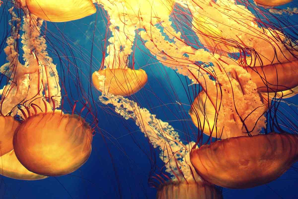 Invasione di meduse nel Mediterraneo
