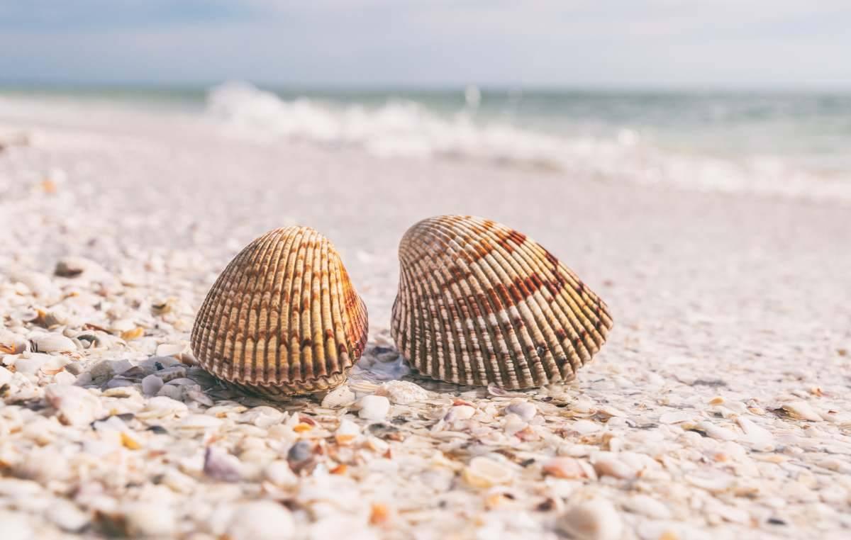 Shell Beach, Austrlia