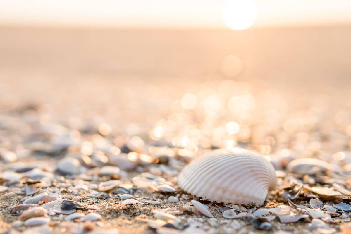 Spiaggia di conchiglie