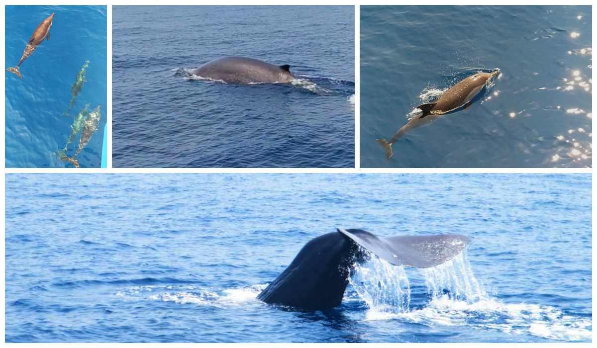 Balene in Liguria