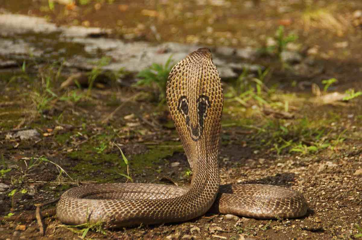 La classifica degli animali più pericolosi al mondo
