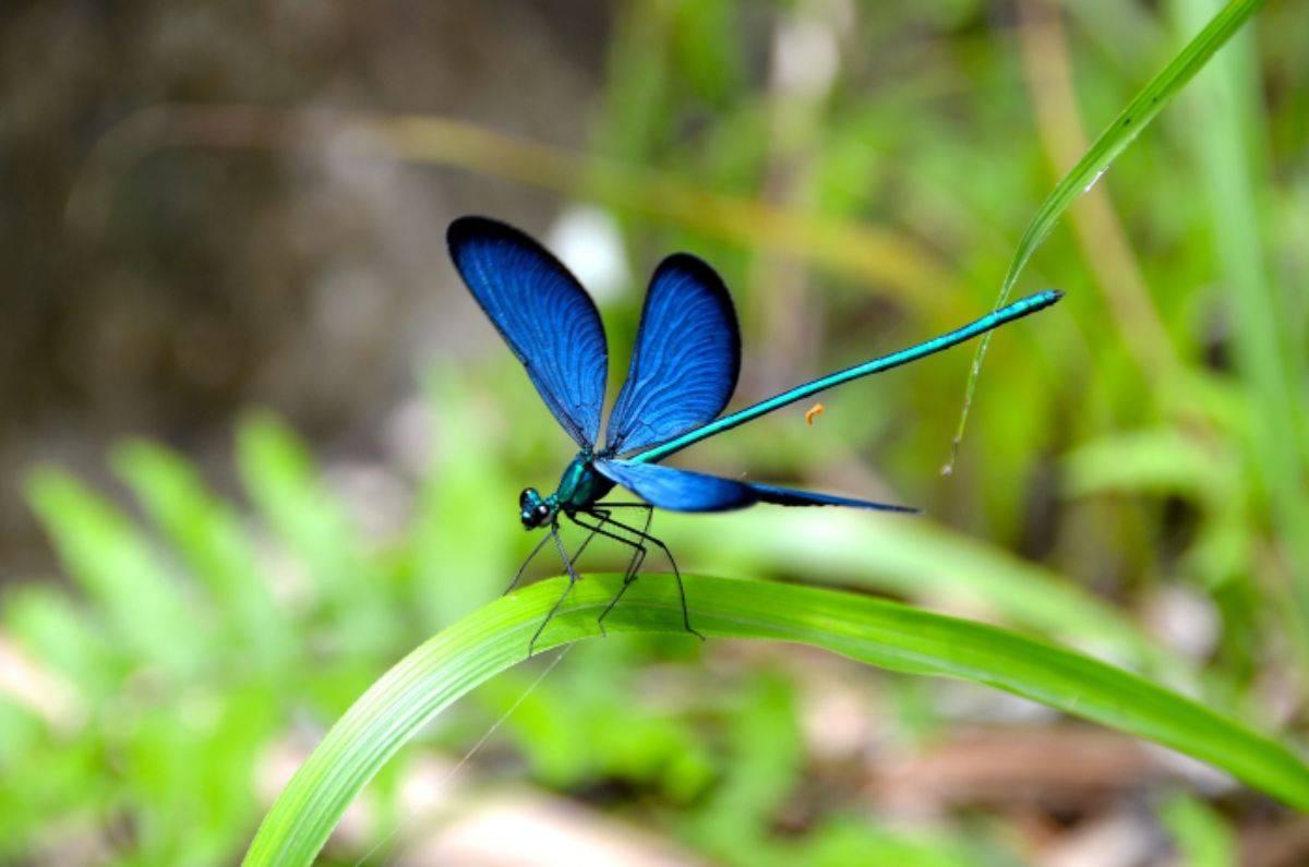 La cascata delle libellule