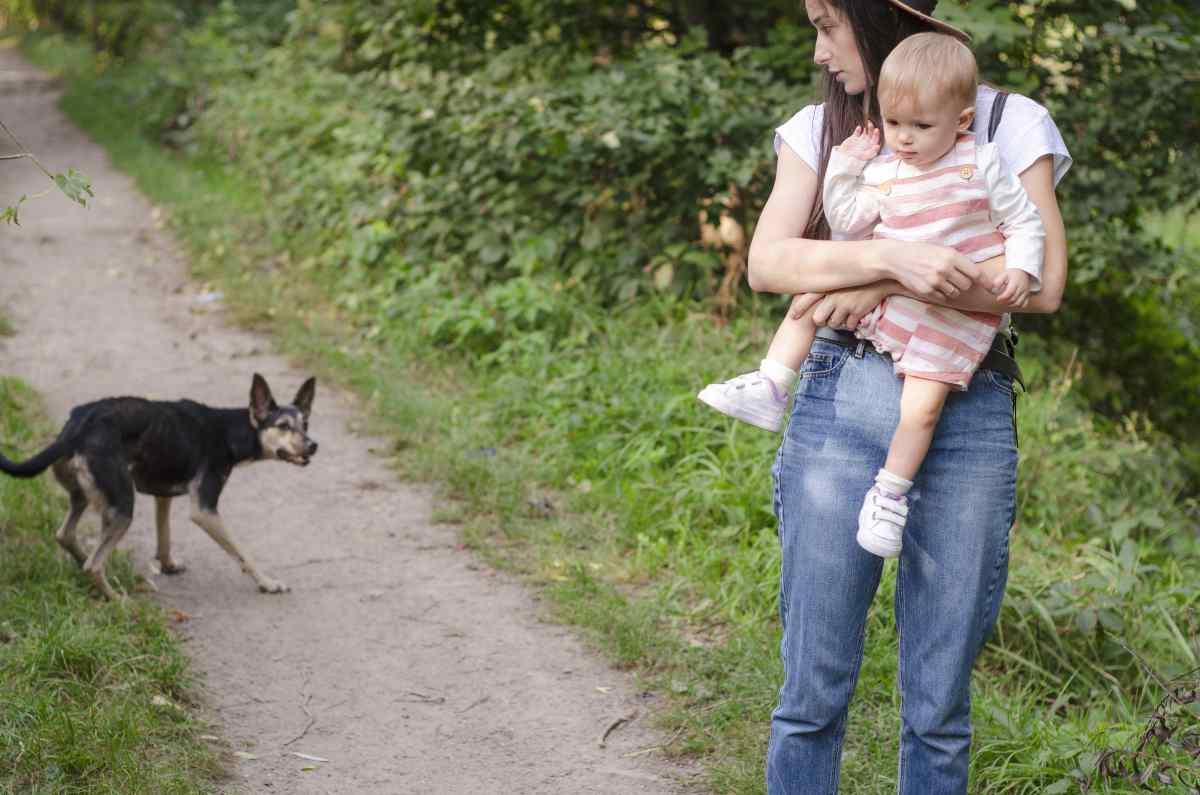 Come comportarsi davanti ai cani randagi