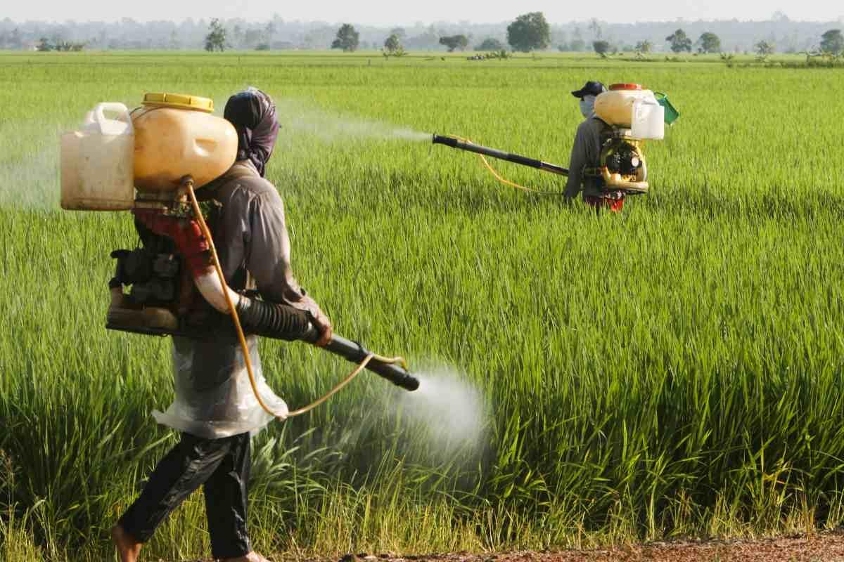 Aree agricole contaminate dai pesticidi