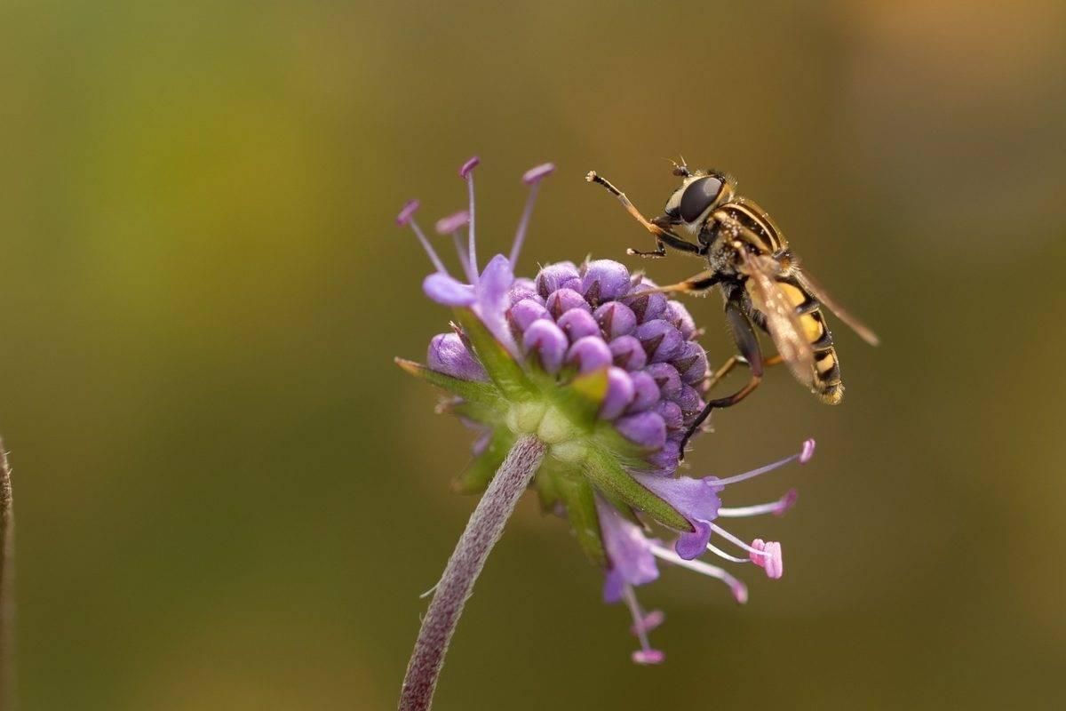 Superare paura insetti