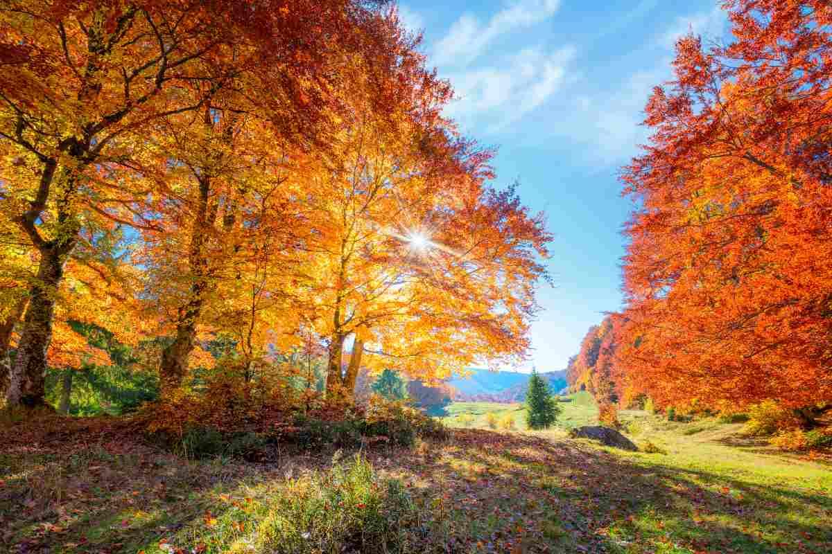 Come ammirare il foliage