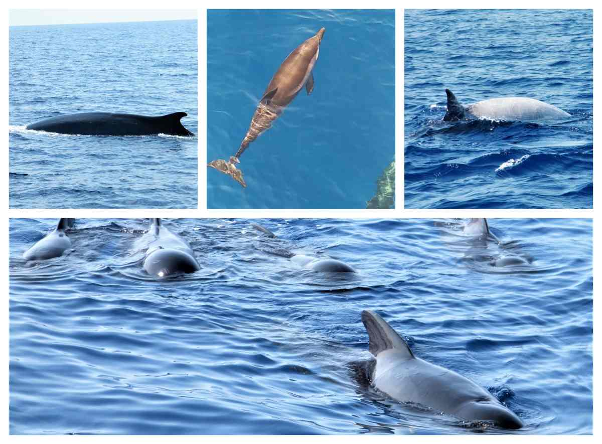 Golfo Paradiso Whale Watching