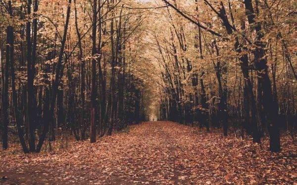 Foliage nel lazio dove andare