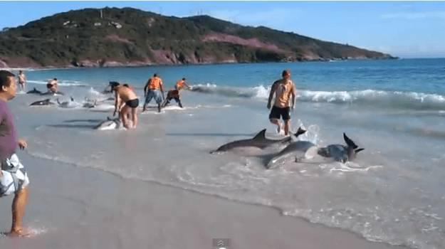 Delfini salvati