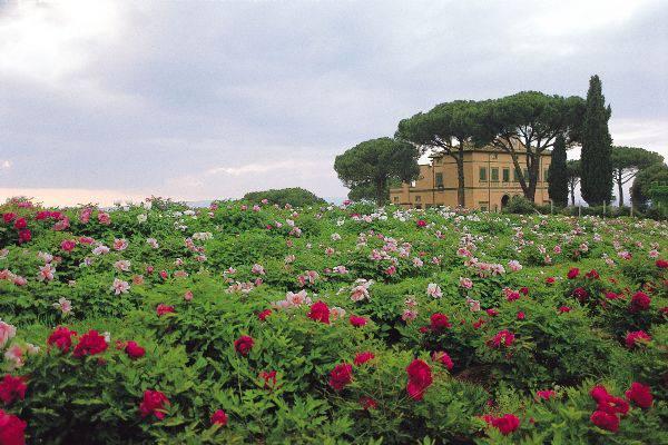 Centro Botanico Moutan, Vitorchiano