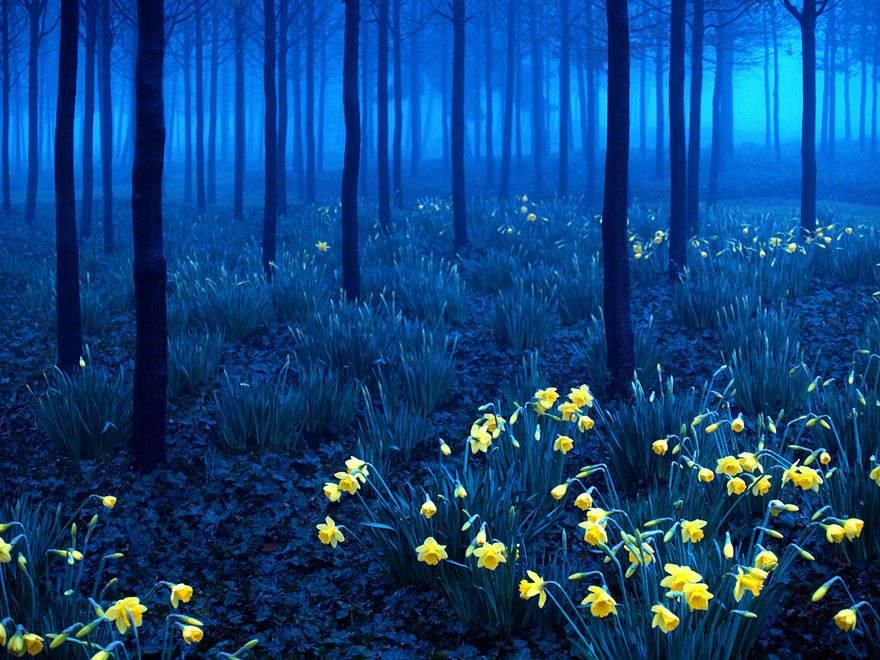 Foresta Nera, Germania.
