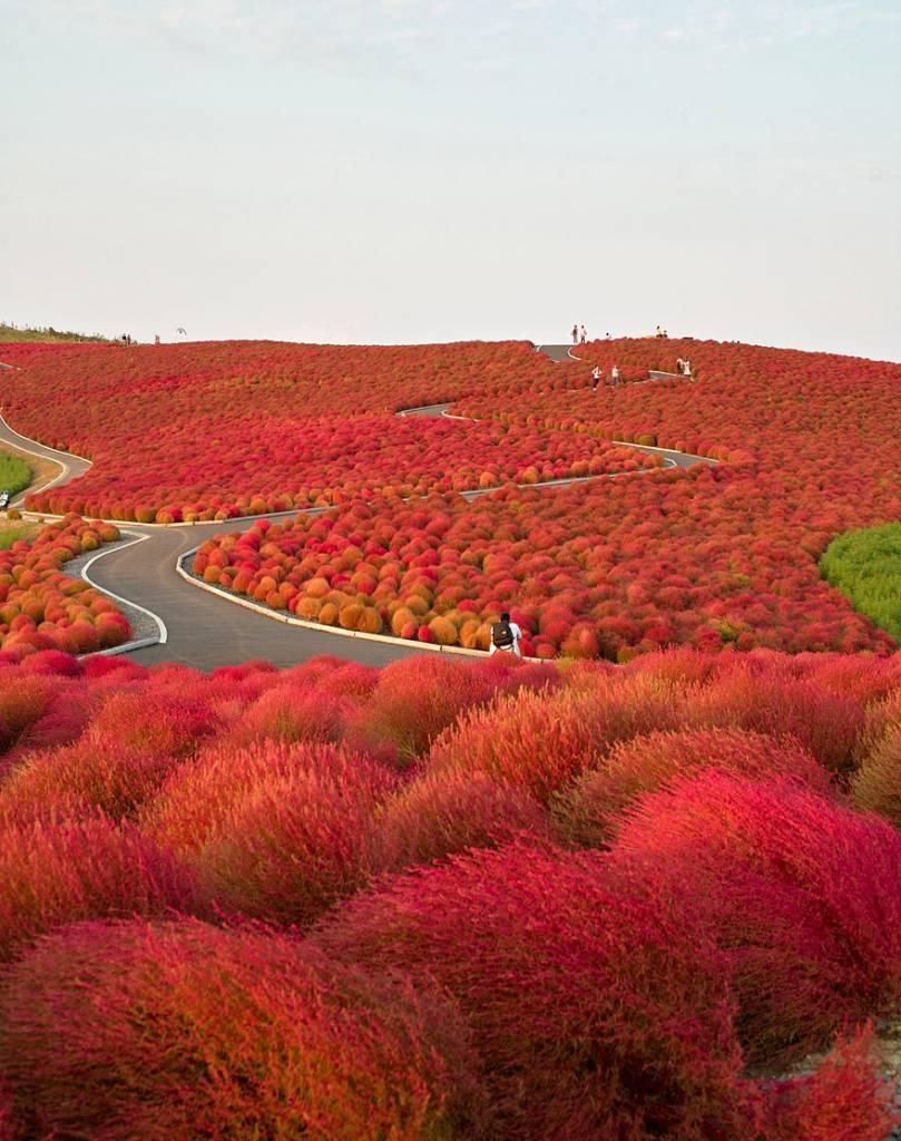 Hitachi Seaside Park, Giappone.