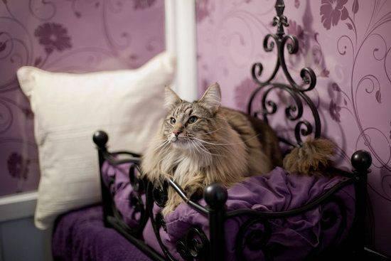 Cat's Dream Hotel
